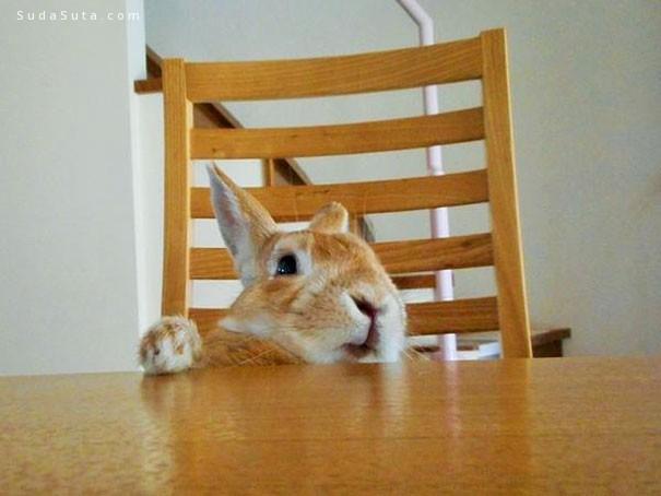 矮小兔子的悲哀