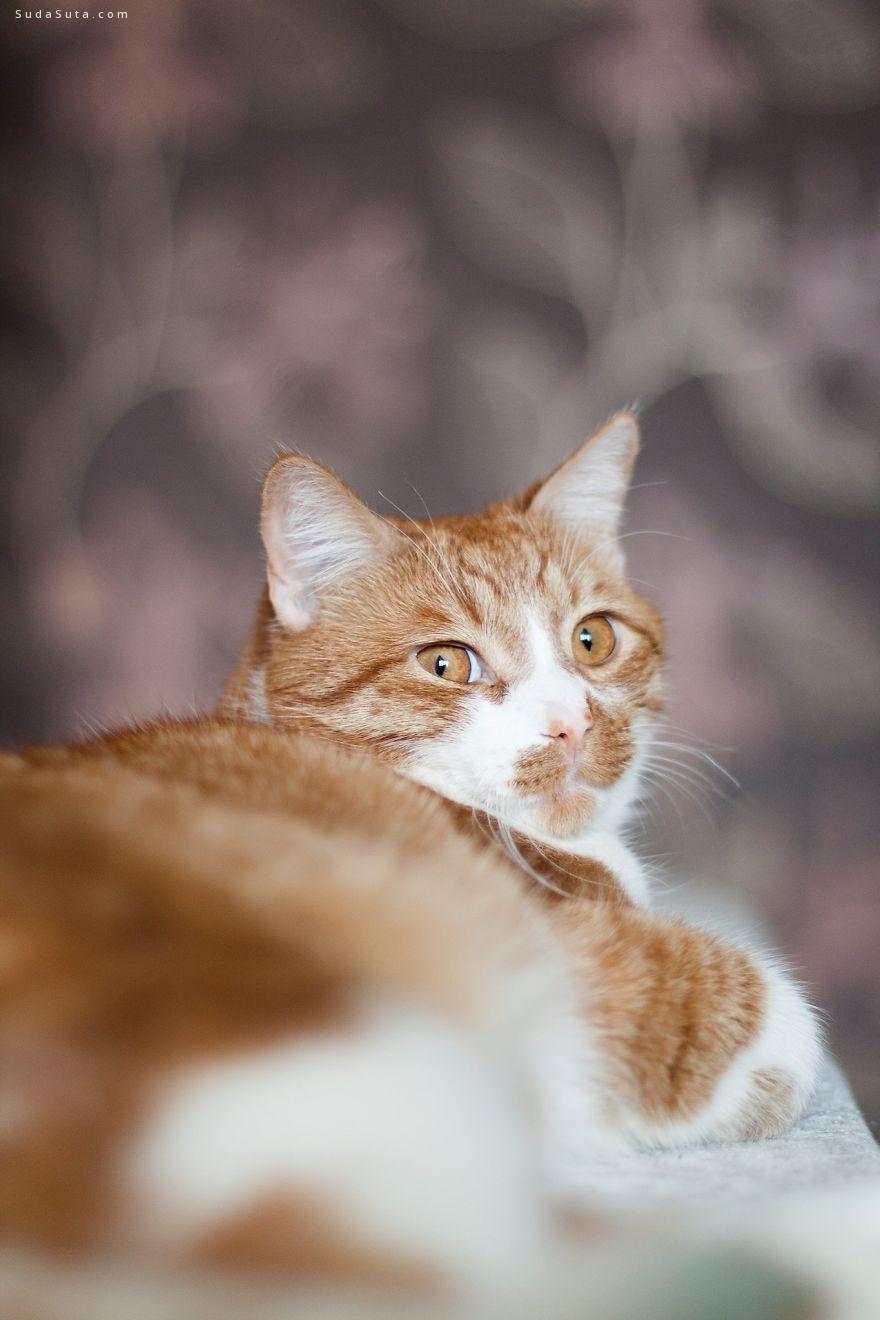 Norvile Dovidonyte 猫咪很有爱 动物肖像插画欣赏