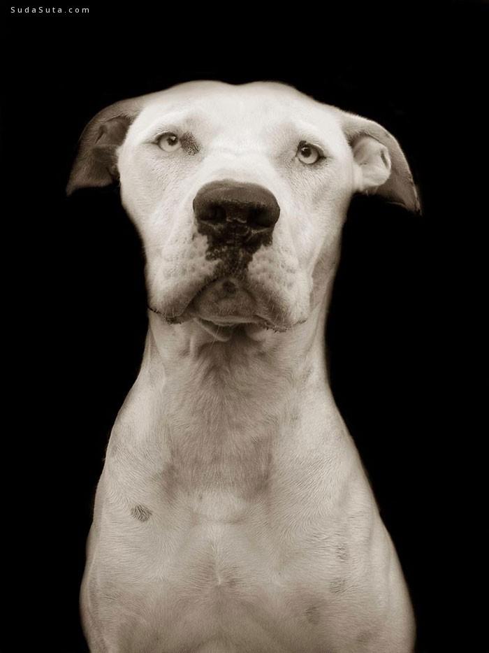 Traer Scott 等待回家的狗狗