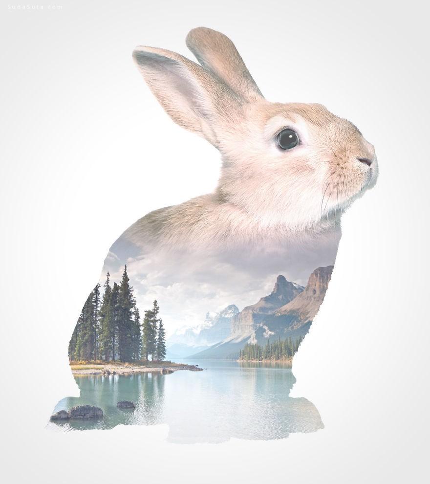 WhatWeDo 我心中有话说 创意动物肖像插画欣赏