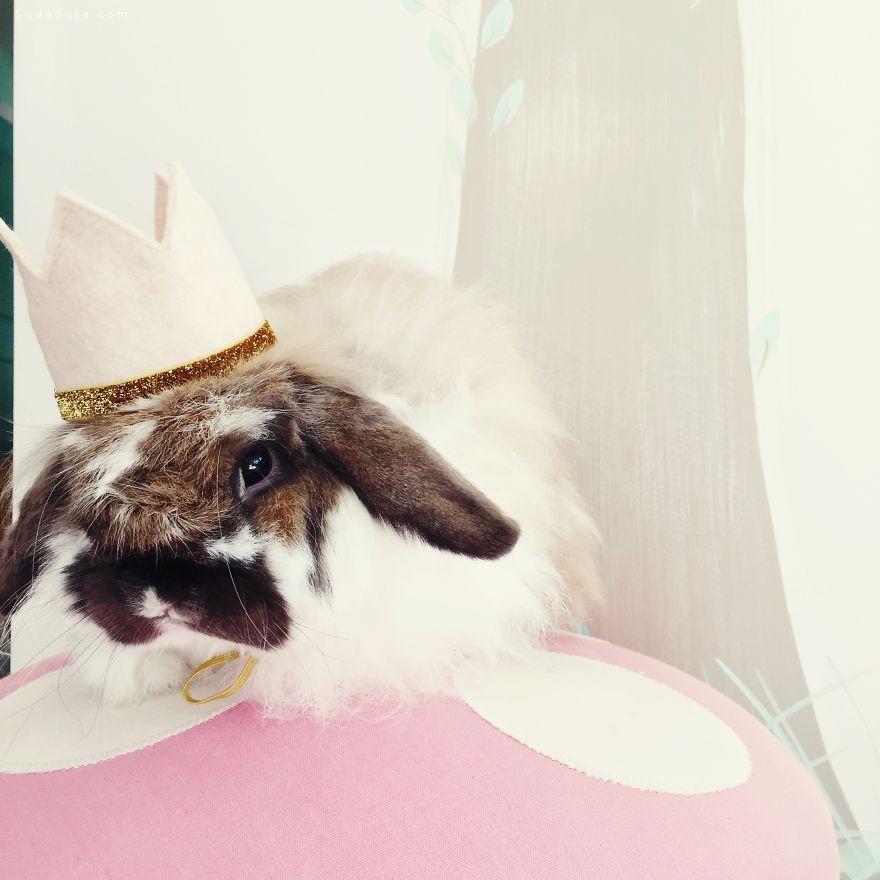 可爱的戴帽子的农场动物