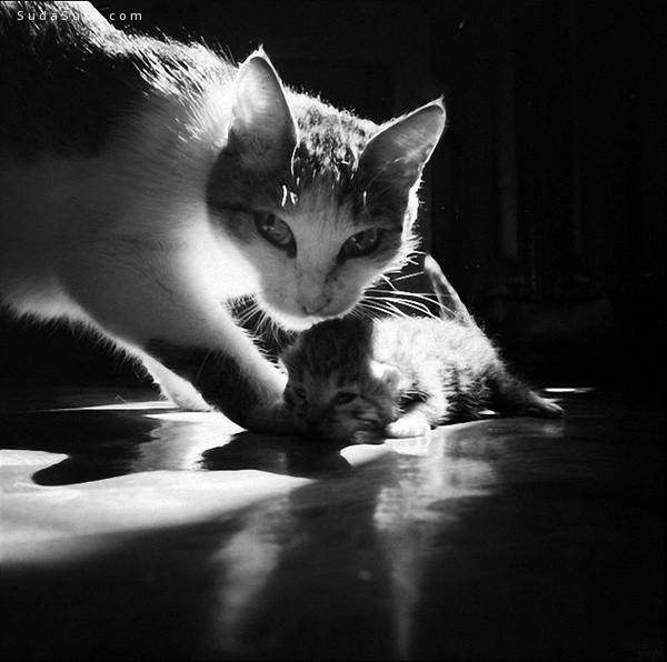 安静的喵星人 黑白摄影欣赏