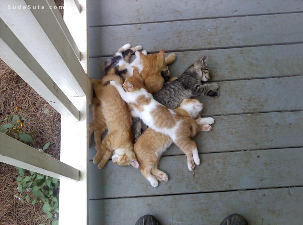 喵咪瞌睡很有爱 宠物摄影欣赏