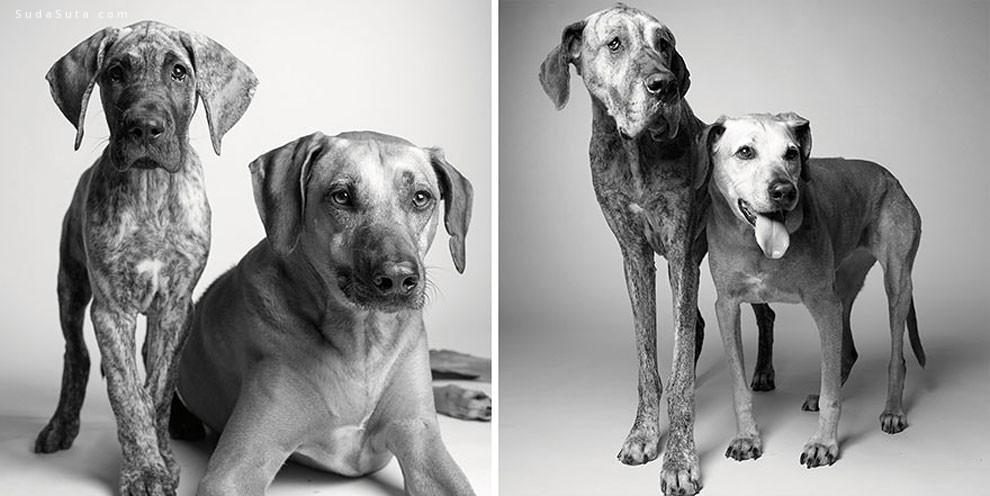 Amanda Jones 狗狗摄影欣赏