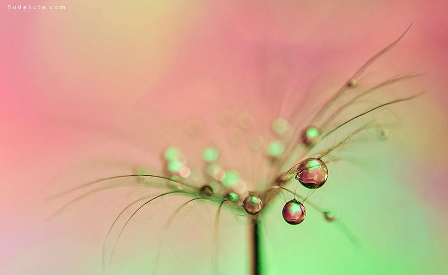 Ivelina Blagoeva 晶莹剔透的水珠