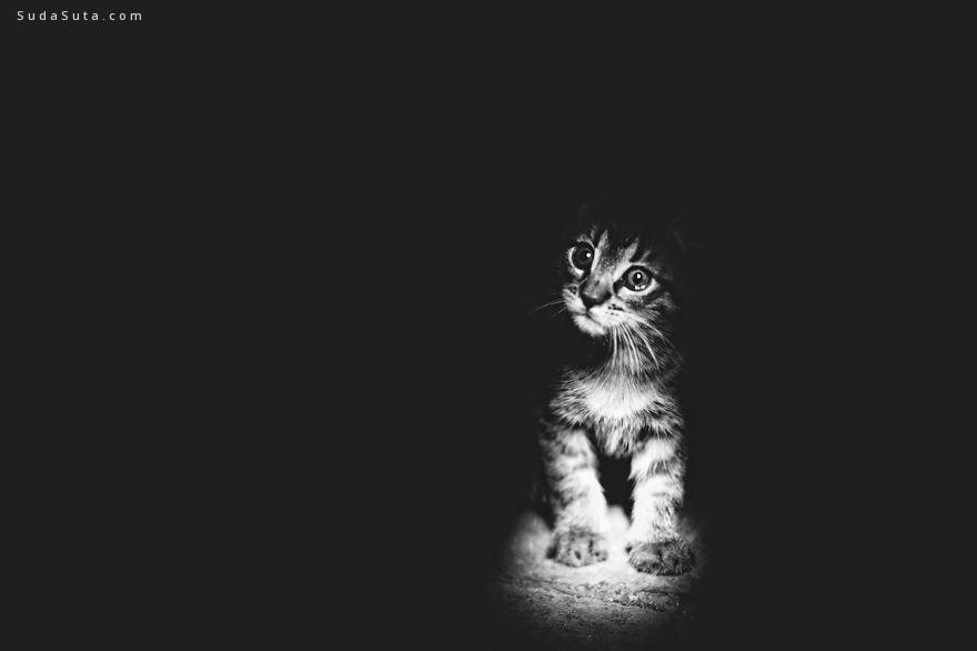 MONIKA MAŁEK 黑白喵星人摄影欣赏