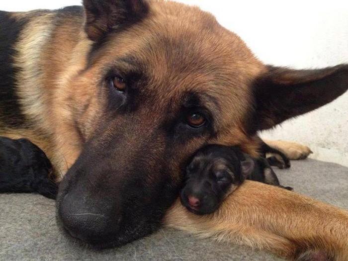 可爱的狗狗和他们的mini宝贝
