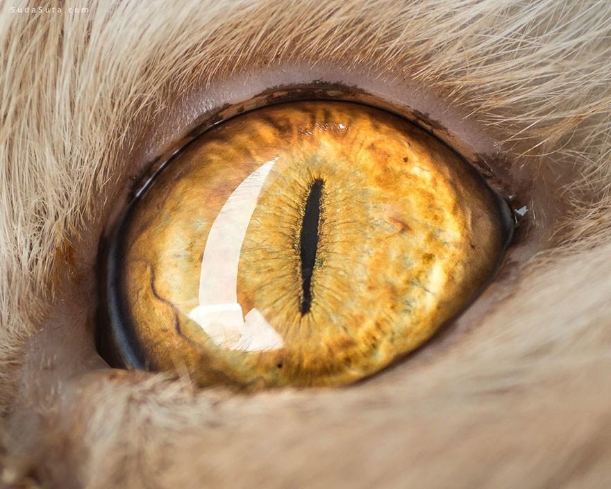 Andrew Marttila 猫眼