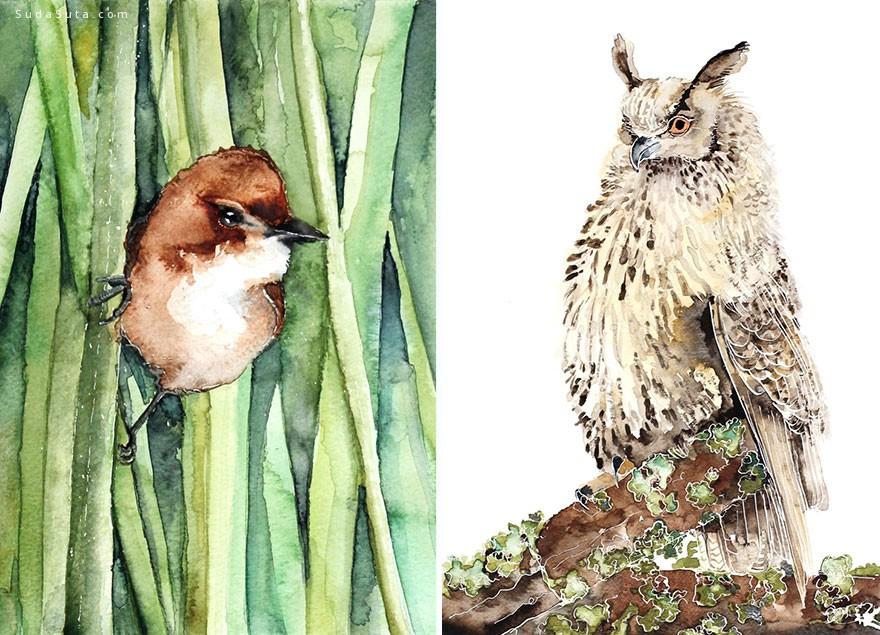Karolina Kijak 细腻唯美的鸟类插画欣赏