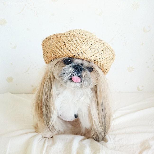 プロフィール  可爱的宠物摄影欣赏