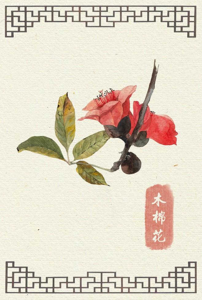 阿昕的自然手绘花绘
