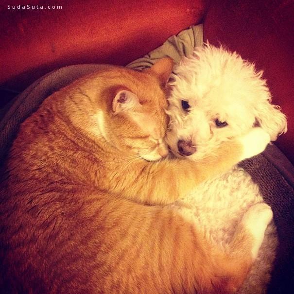 猫猫狗狗爱睡觉