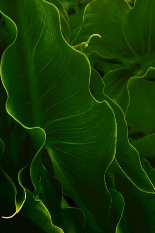 绿色 主题摄影欣赏