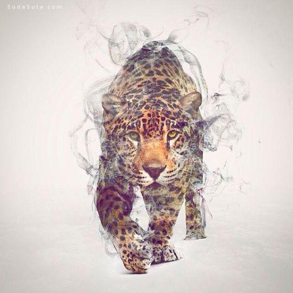 Taylor Dániel 烟 动物和自然 混合艺术欣赏