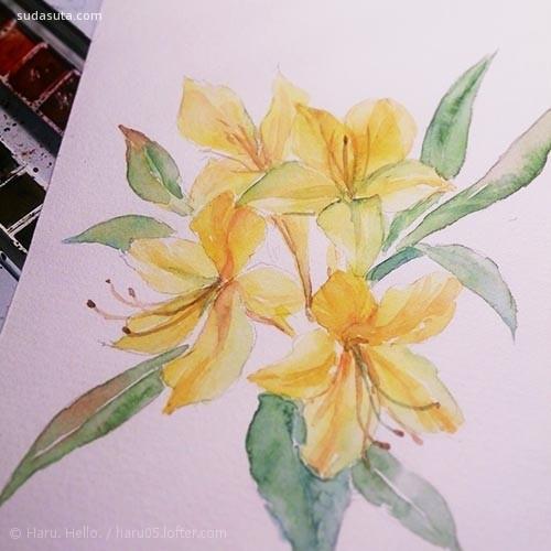 豆芽君的haru酱 温暖安静的手绘花朵