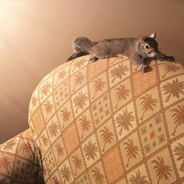 Jill 可爱的松鼠 宠物摄影欣赏