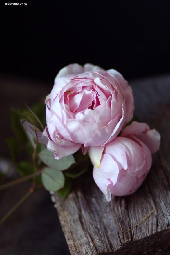 花儿の乐章。静物摄影欣赏