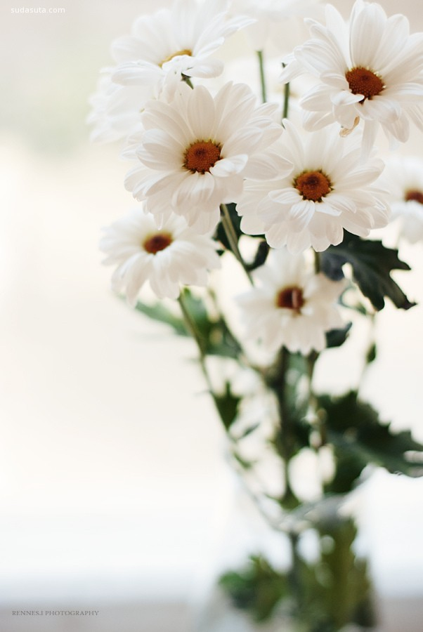 浅白色 婚礼花朵欣赏