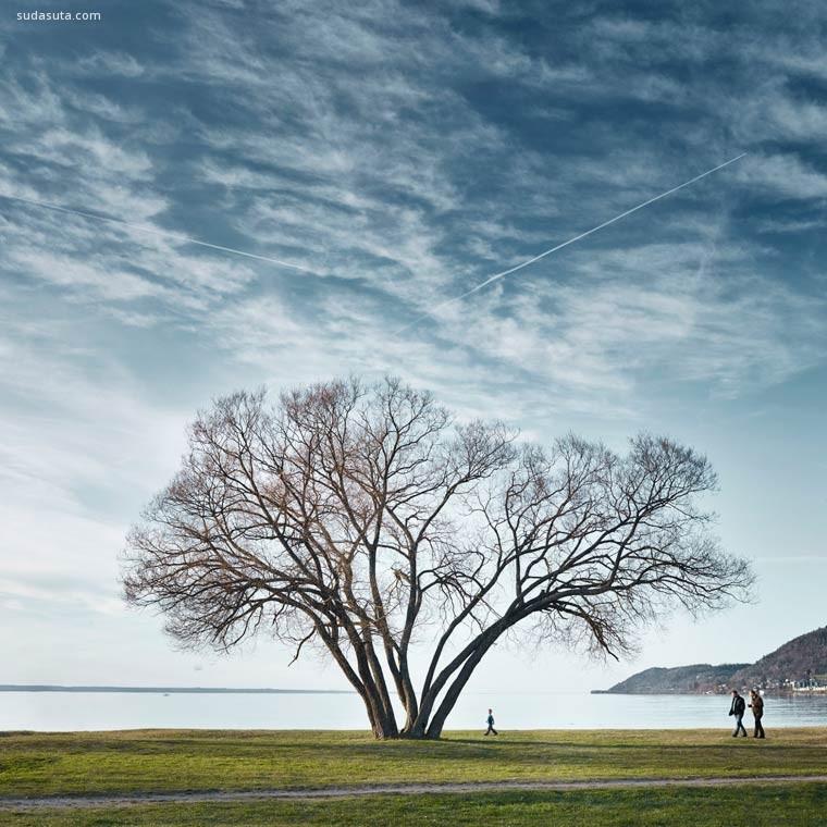 The Broccoli Tree 树的姿态