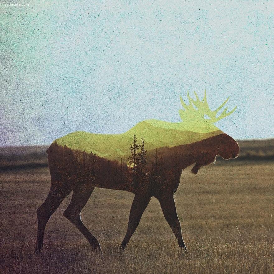 Andreas Lie 双重曝光 自然与动物 剪影般的艺术欣赏