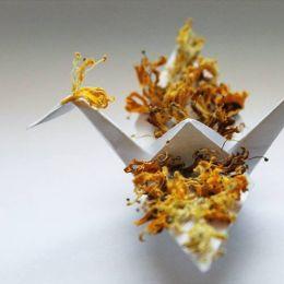 Cristian Marianciuc 的每日计划 手工千纸鹤