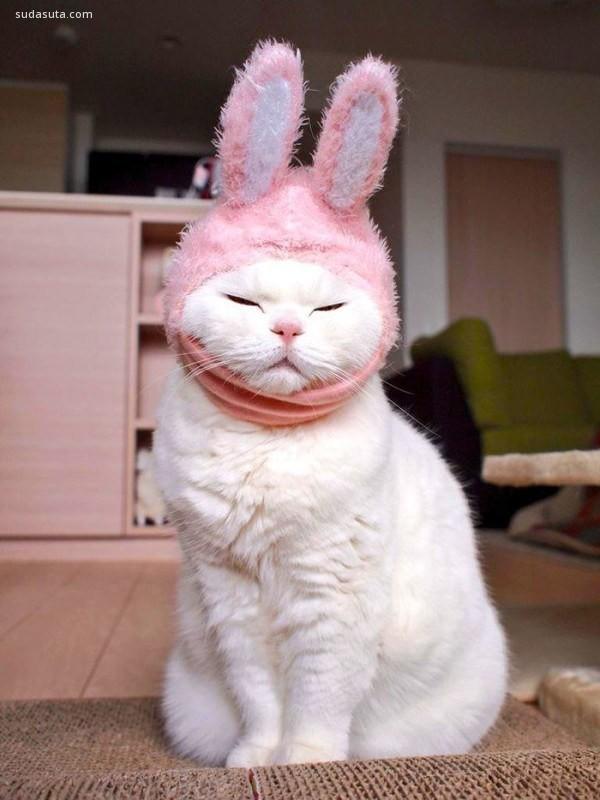 Ura 缓慢而优雅 猫咪摄影欣赏