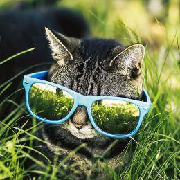 Felicity Berkleef 我与猫咪的回忆