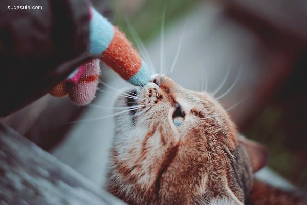 Mary-Chan23 温馨浪漫的宠物摄影欣赏