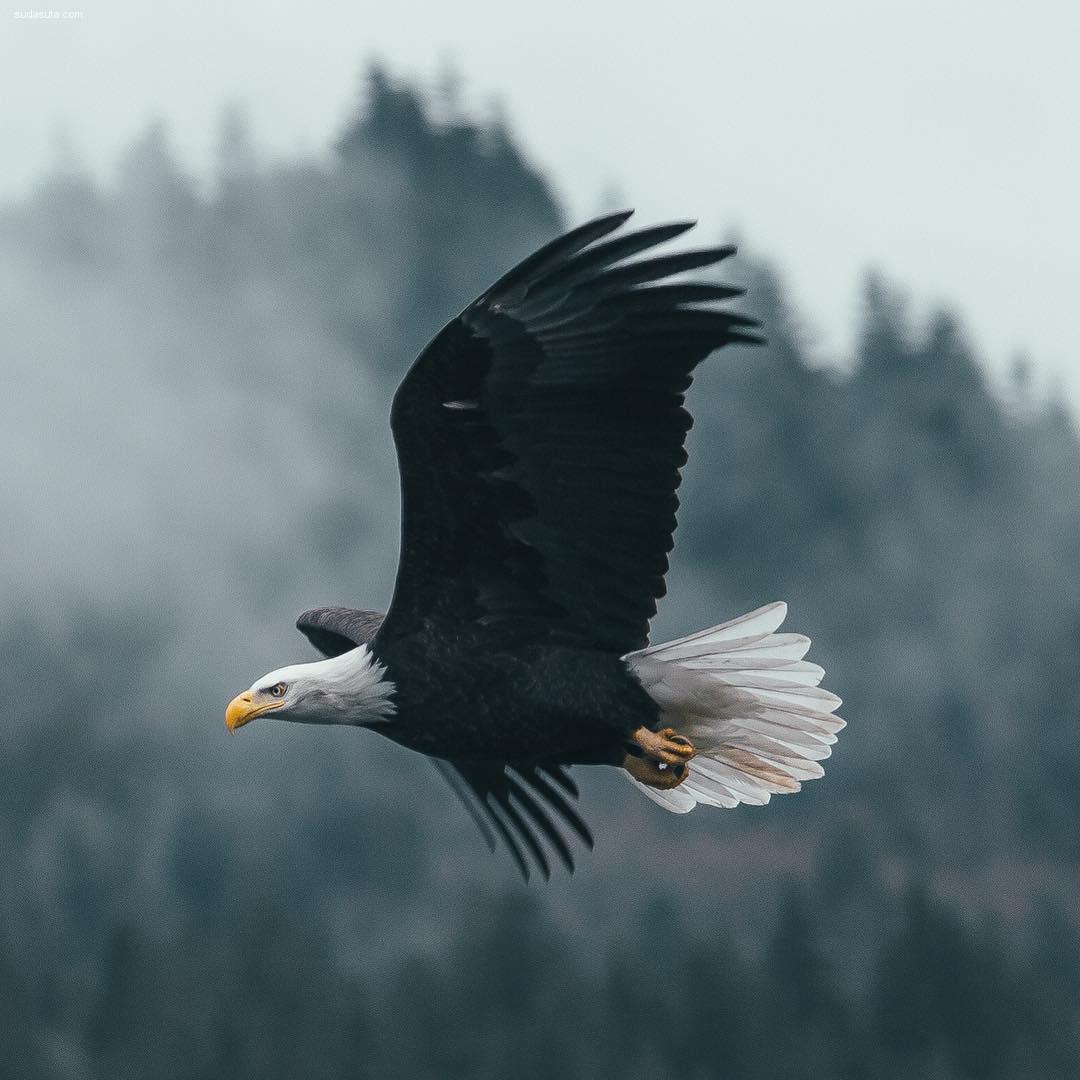 Dylan Furst 自然摄影欣赏