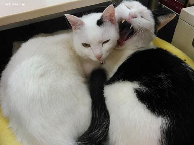 Ferray Corporation 猫咪解决方案