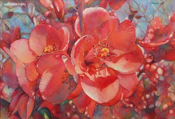 Jeannie Vodden 遇见花开