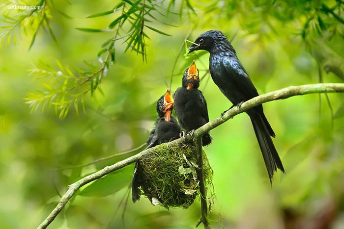 妈妈与宝宝 鸟类摄影欣赏