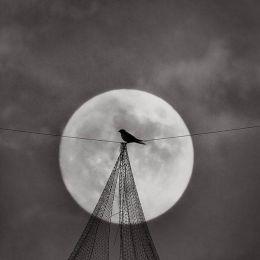 Stuart Bulman 观鸟记