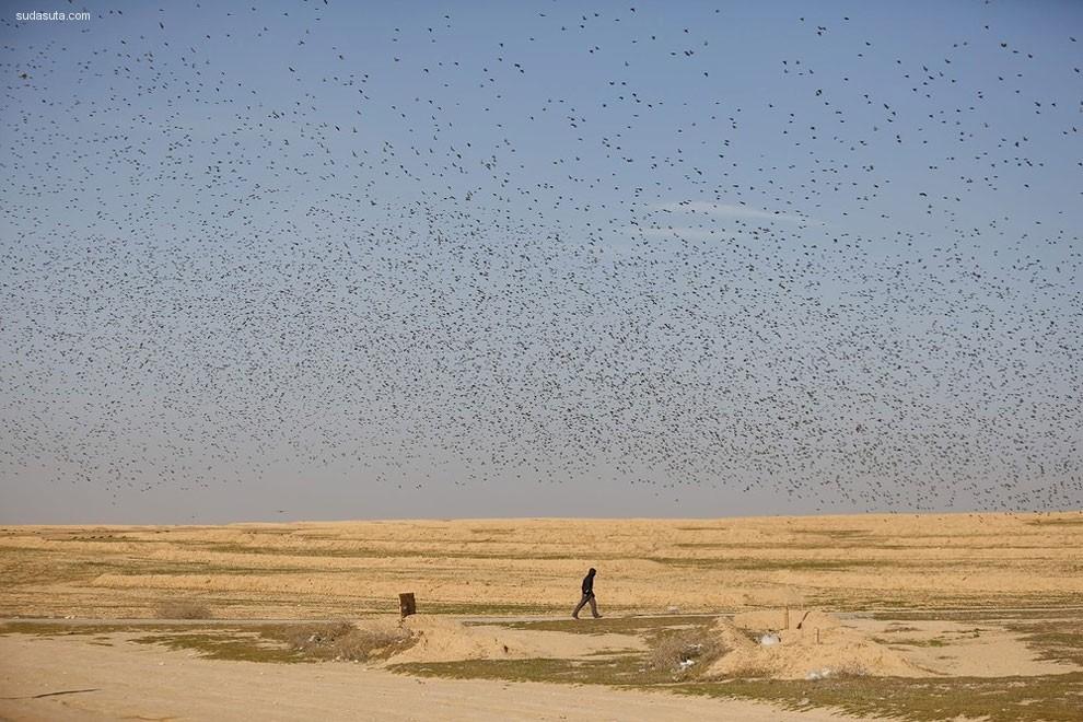 Amir Cohen 鸟类摄影欣赏