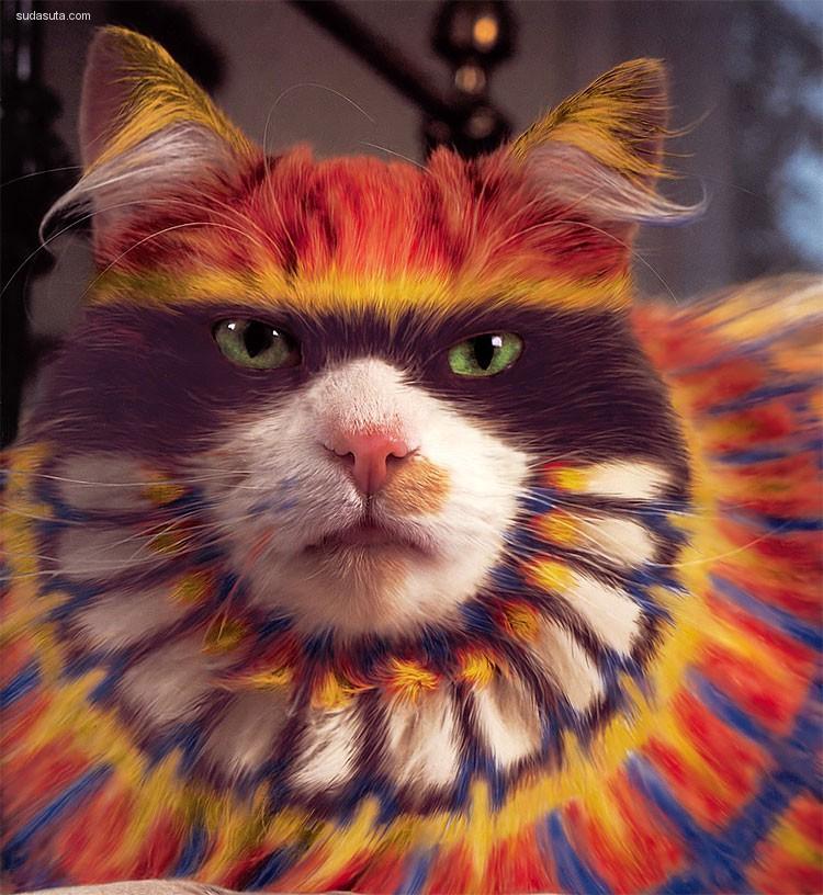 为什么给猫咪化妆?猫美学伦理