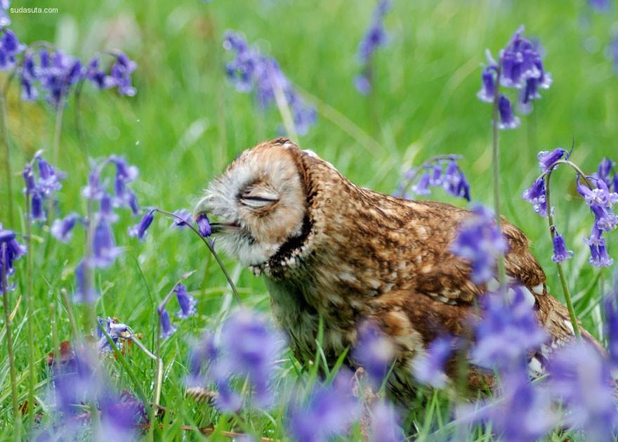 小动物帮助他们携带散发花粉