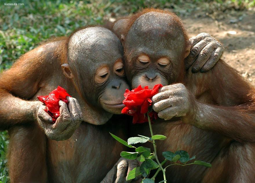 动物与花香,馥郁无比