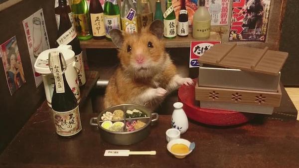 kawanabesatou家的小仓鼠 宠物摄影欣赏