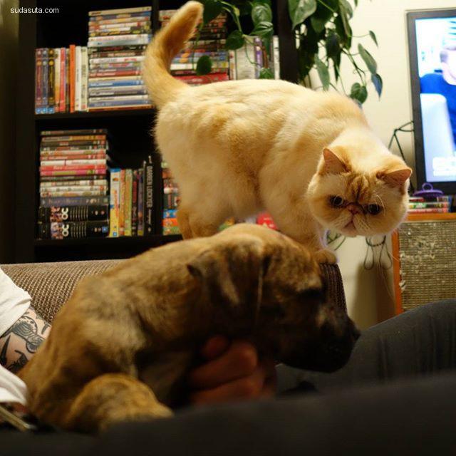 Barry 宠物摄影欣赏