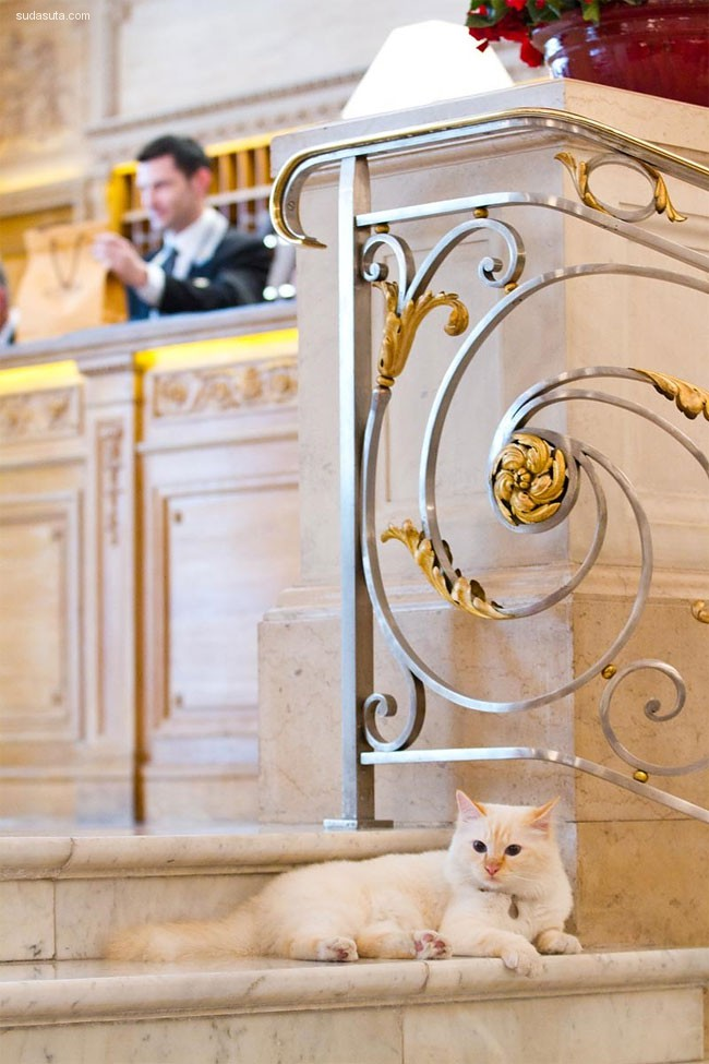 Le Bristol酒店的两只喵