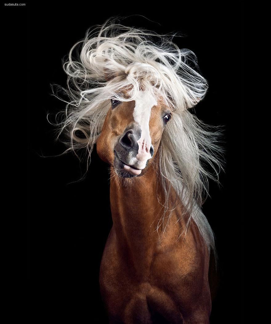 Wiebke Haas 马的肖像摄影欣赏