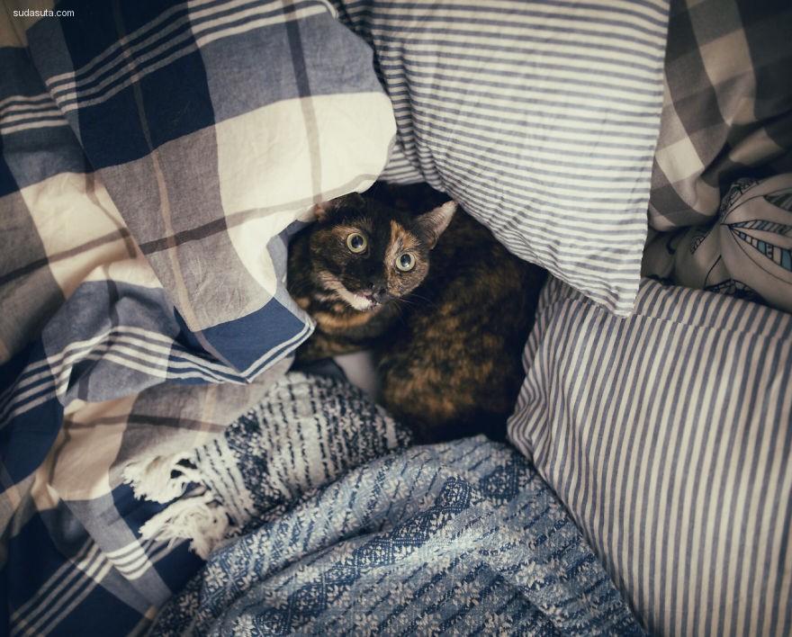 Magdalena Grześkowiak 我和我的猫(=^・ェ・^=)