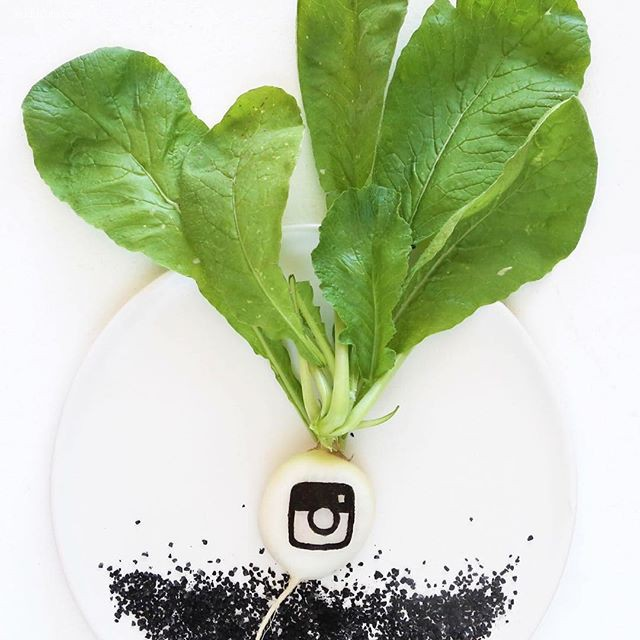 Elisa M. Bermúdez 新鲜的美食艺术