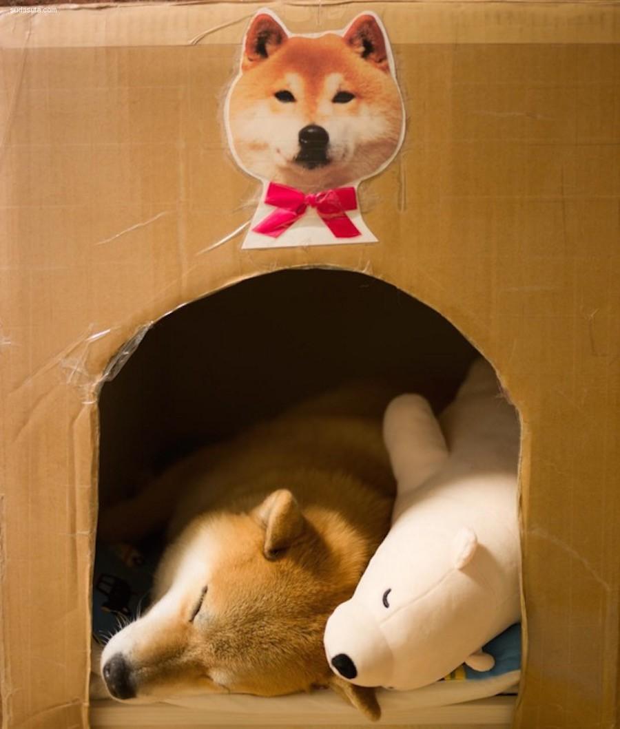 Maru 和他的玩具北极熊