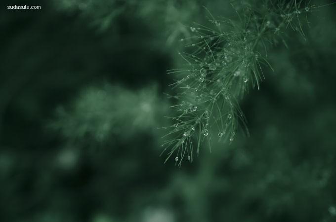 Doina-Domenica Cojocaru 噩梦