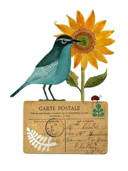Geninne D. Zlatkis 鸟与花朵 装饰插画欣赏
