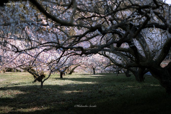 Hidenobu Suzuki 摄影作品欣赏