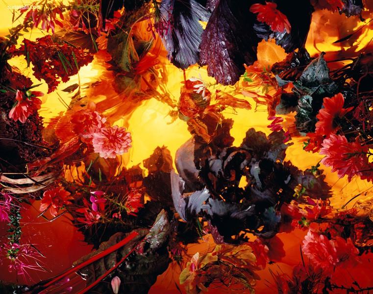 Margriet Smulders 花朵