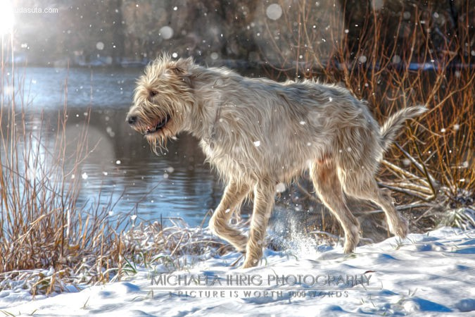Michaela Ihrig 自然摄影欣赏