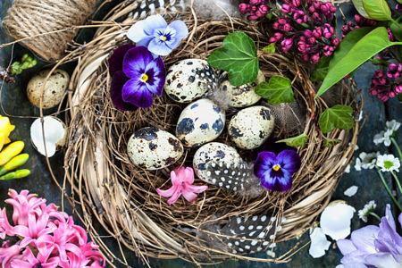 Natalia Klenova 花朵与美食